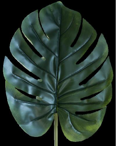Liść Mostery