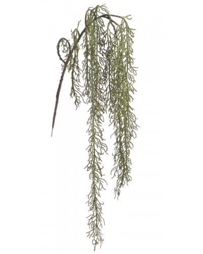 Roślina Zwisająca Zielona