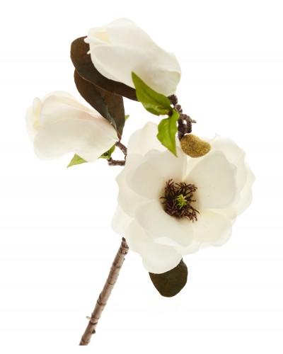 Magnolia Gałązka Biała