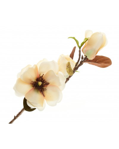 Magnolia Gałązka Łososiowa