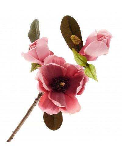 Magnolia Gałązka Różowa